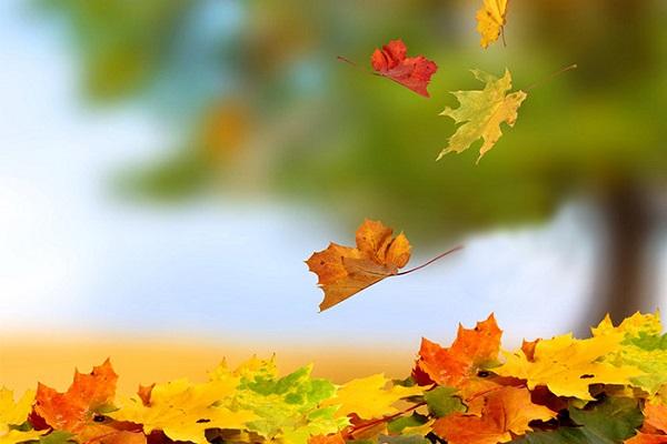 نماز و فصل پاییز