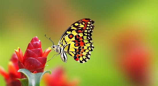 همسایه ی پروانه ها