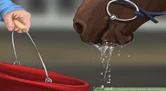 آب دادن اسب در حال نماز