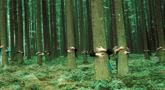 بازی تربیتی دوستی با درختان
