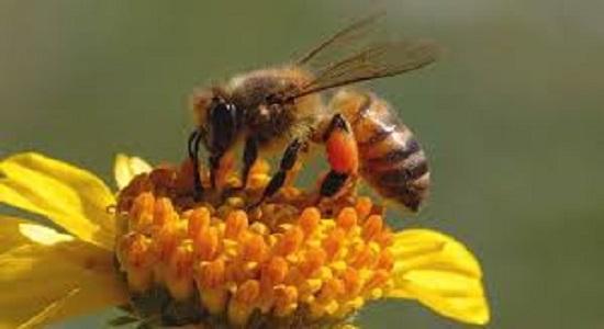 بازی زنبورهای عسل و کندو